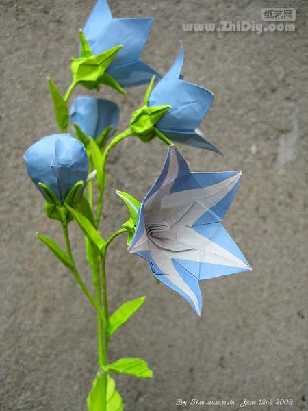 Origami Balloon Flower